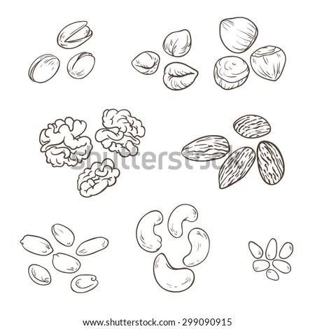 Set of different nuts. Vector illustration