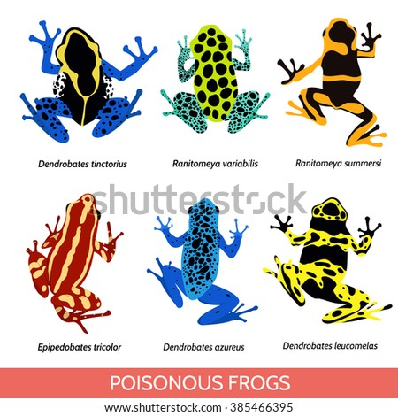 Set of different poisonous frogs. Vector illustration of poisonous frogs on a white background.Set of isolated frogs. Frog clip-art. Dyeing dart frog. Blue poison dart frog. Phantasmal poison frog - stock vector