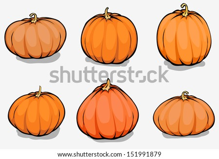 Set of different pumpkins,harvest illustration isolated on white background - stock vector
