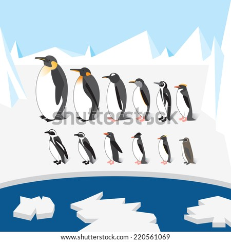 Set of different species of penguins on the ice. All species sorted by height. - stock vector