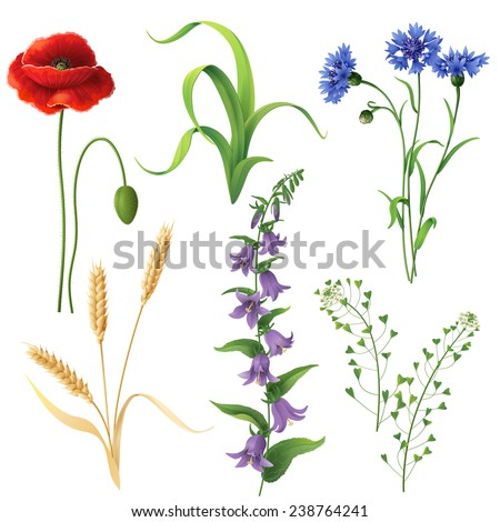 Set of different wildflowers, wheat ears and  grass  isolated on white. - stock vector