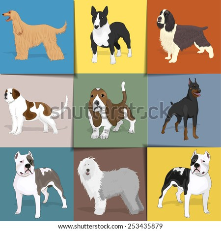 Set of dogs with square background. Vector eps10. - stock vector
