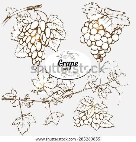 Set of drawings grape - stock vector