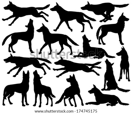 Set of editable vector silhouettes of wolves in different poses - stock vector