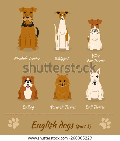 Set of English dogs - part 1. Vector Illustration of six different breeds of dogs: Airedale Terrier; whippet; Wire Fox Terrier; Bull Terrier; Norwich Terrier; bulldog. - stock vector