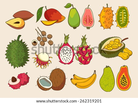 Set of exotic fruit. Vector illustrations.