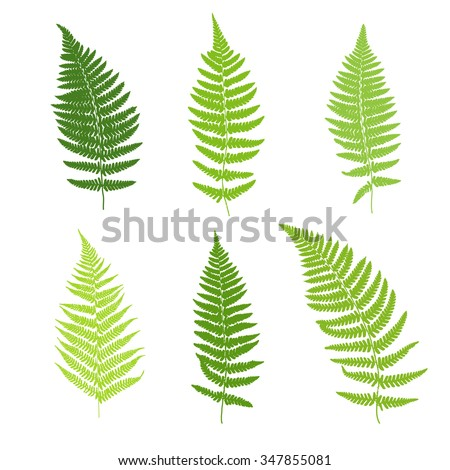 Set of fern frond silhouettes. Vector illustration - stock vector