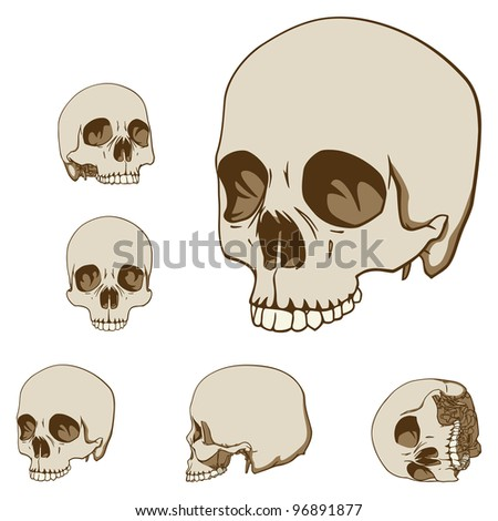 Set of Five Drawings of Human Skull. Vector Illustration - stock vector