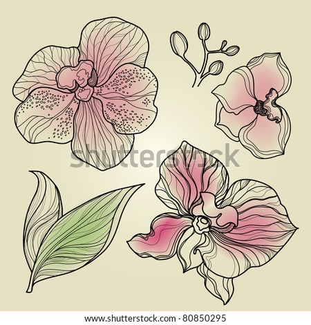 """Set of floral orchid design elements (from my big """"Flower-set collection"""") - stock vector"""