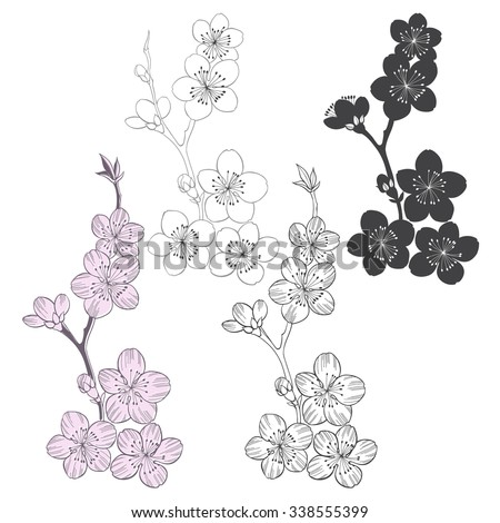 Set of flowering cherry branches  isolated on white background. Hand drawn vector illustration, sketch. Elements for design. - stock vector