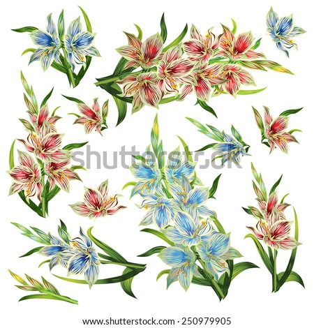 Set of flowers and bouquet from the elegant striped gladioluses on white background. - stock vector
