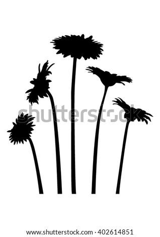 Set of flowers - gerber daisy - on stem  - black silhouette - vector - stock vector