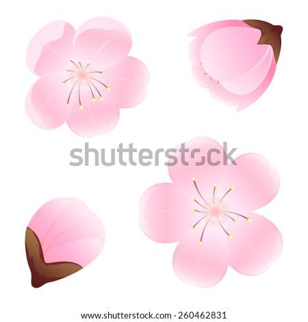 Set of flowers isolated on white background, illustration. - stock vector