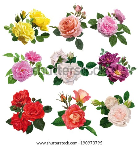 set of flowers, multicolored roses with leaves - stock vector