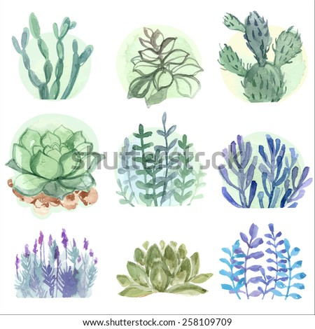 Set of flowers painted in watercolor on paper. Vector. Coloured bright colors. horticulture. Succulents and cacti - stock vector