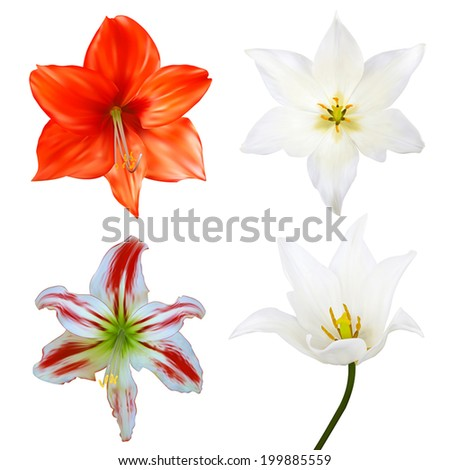 Set of flowers. Photo-realistic Vector illustration. Isolated on white - stock vector