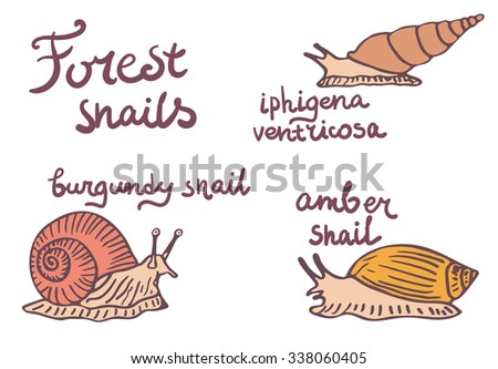 Set of forest snails isolated illustrations. Burgundy snail, amber snail and iphigena ventricosa.  - stock vector