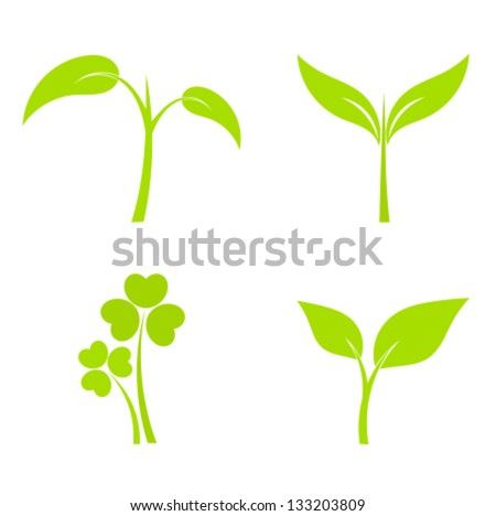 Set of four plant or leaf icons. Vector illustration - stock vector