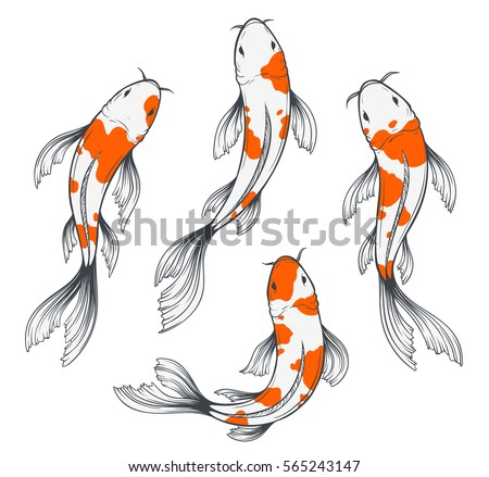 Set four traditional japanese koi fishes stock vector for Japanese koi fish drawing
