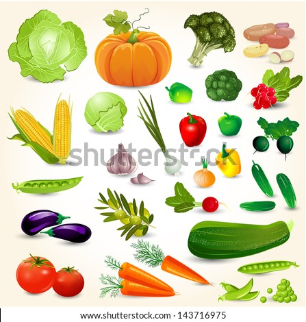 Set of fresh vegetables for your design - stock vector
