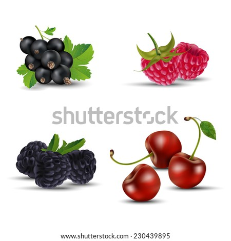 Set of fruits - blackcurrant, raspberry, blackberry and cherry. Isolated on white background - vector illustration. - stock vector