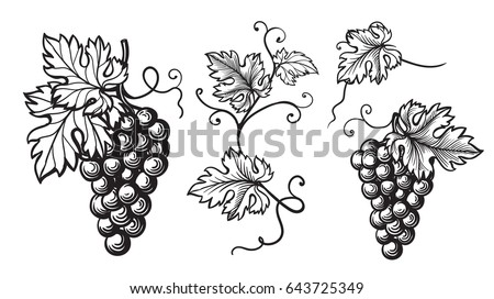 Set Of Grapes Monochrome Sketch Hand Drawn Grape Bunches