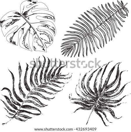Set of graphic illustration of tropical palm leaves isolated on white background. Vector ink illustration - stock vector