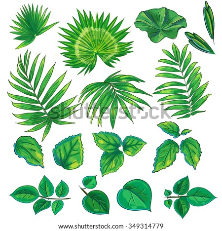 Set of green branches with leaves of palm trees, roses, hibiscus and lotus on a white background.  - stock vector