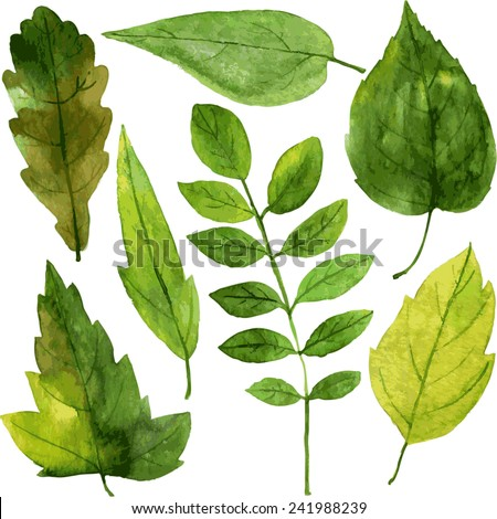 set of green leaves drawing by watercolor, hand drawn vector elements - stock vector