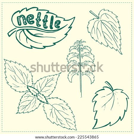 Set of green nettle branch and leaf. Hand drawn sketch. Vector illustration. - stock vector