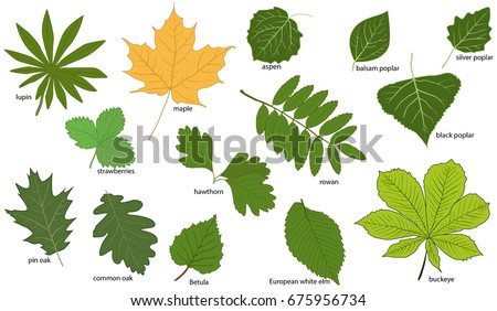 set green tree leaves their names em vetor stock 675956734