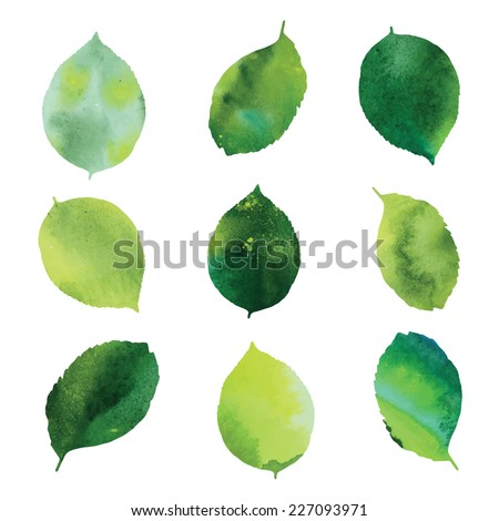 Set of green watercolor leaves - stock vector
