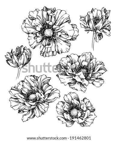 Set of hand drawing poppy flowers