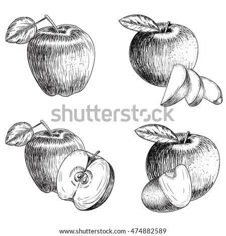 Vintage 1950s Harvest Fruit Vegetables Detailed Stock Vector 28251157 - Shutterstock