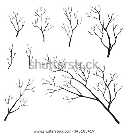 Set of hand drawn branches isolated on white background. Tree twigs and branches. - stock vector