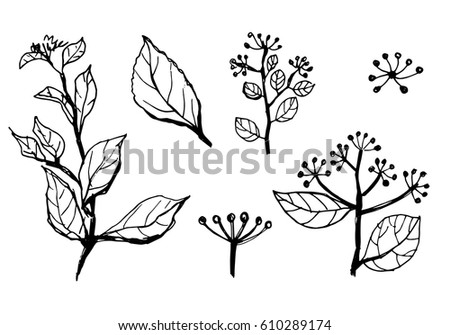 Set Of Hand Drawn Branches With Leaves Flowers Floral Sketch Collection Line Drawings