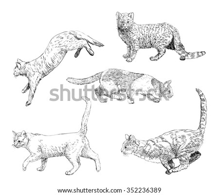 Set of hand drawn cats - stock vector