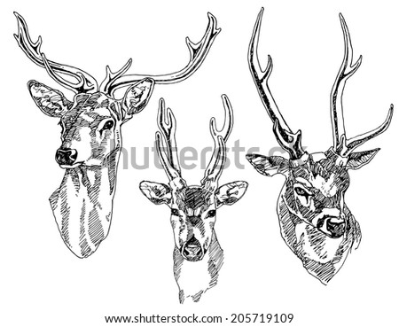 Set of hand drawn deer heads. Vector illustration. - stock vector