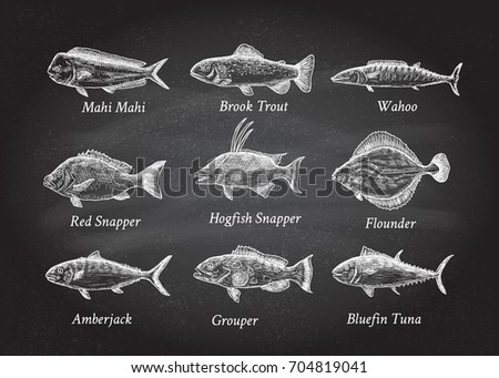 Set of hand drawn fish on a black chalkboard.