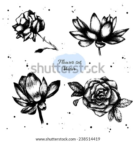 Set of hand drawn flower sketches. Rose and lotus. Isolated elements. Vector. - stock vector