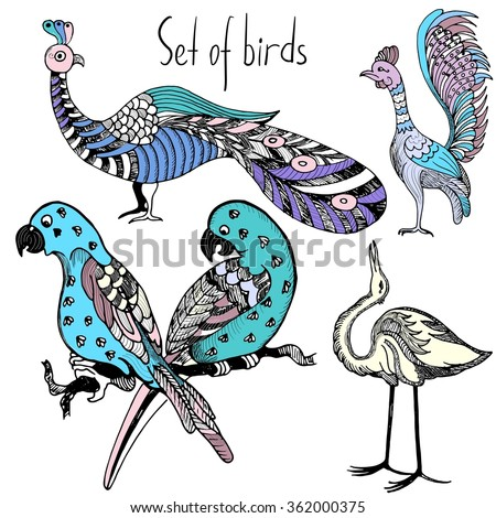 Set of hand drawn multicolor birds. Vector sketch of hand drawn birds. Budgerigar, parrot, peacock, heron, crane and rooster. Vector illustration - stock vector