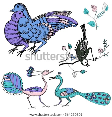 Set of hand drawn multicolor birds. Vector sketch of hand drawn birds. Doves and peacock. Chinese style, Sumi-e. Vector illustration - stock vector