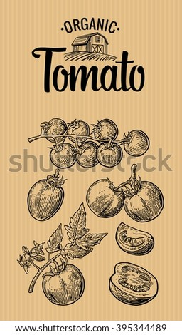 Set of hand drawn tomatoes on brown background. Tomato, half and slice. Vintage vector engraving illustration for logotype, label, poster, corporate identity, badges, presentations for organic farm.