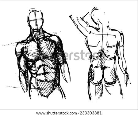 set of hand drawn vector sketch art of two male torsos - stock vector