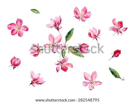 Set of Hand drawn watercolor illustration Red Apple Flowers. Vector, Isolated on white background. Element for design of invitations, movie posters, fabrics and other objects. - stock vector