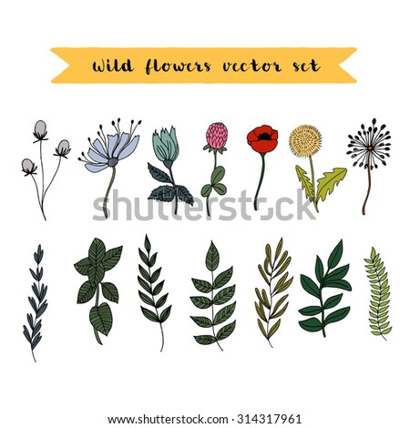 Set of hand-painted wild flora. Vector illustration. Colorful floral collection of wild leaves and flowers. Spring or summer design for invitation, wedding or greeting cards. EPS 8 file. - stock vector