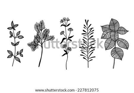 Set of herbs silhouettes, hand drawn vector illustration - stock vector