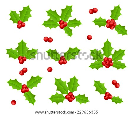 Set of Holly berries isolated on white background, illustration. - stock vector
