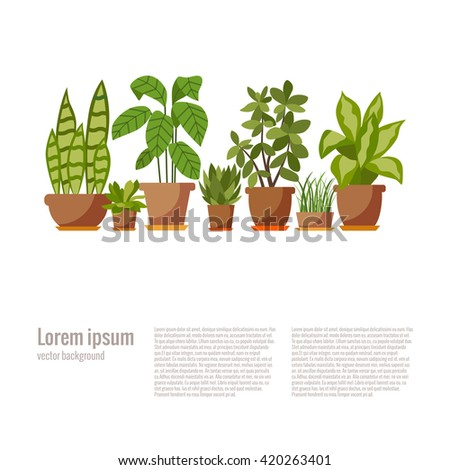 Set of house plant isolated. Vector flat house plant pot illustration. Collection of flat home plant pot. Colorful house plants in pot for your design. Home plants icons set - stock vector