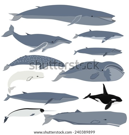 Set of images of whales. The illustration on white background. - stock vector